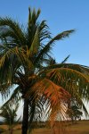 Nevis Palm Breeze